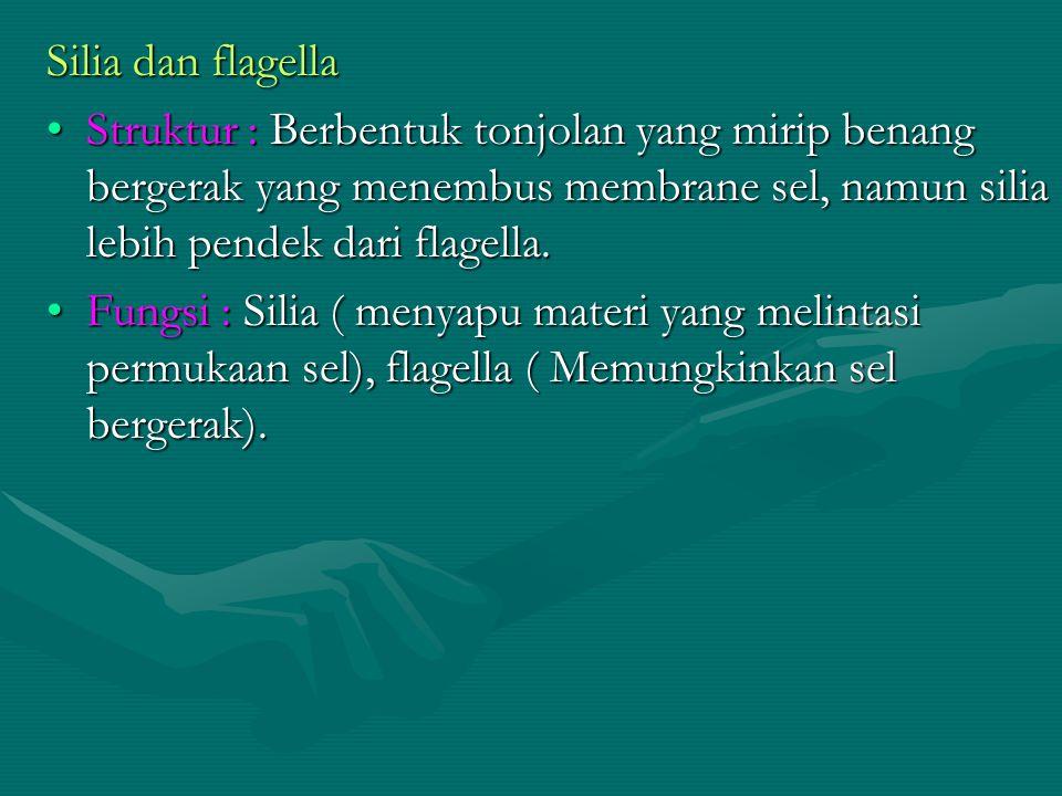 Silia dan flagella Struktur : Berbentuk tonjolan yang mirip benang bergerak yang menembus membrane sel, namun silia lebih pendek dari flagella.Struktu