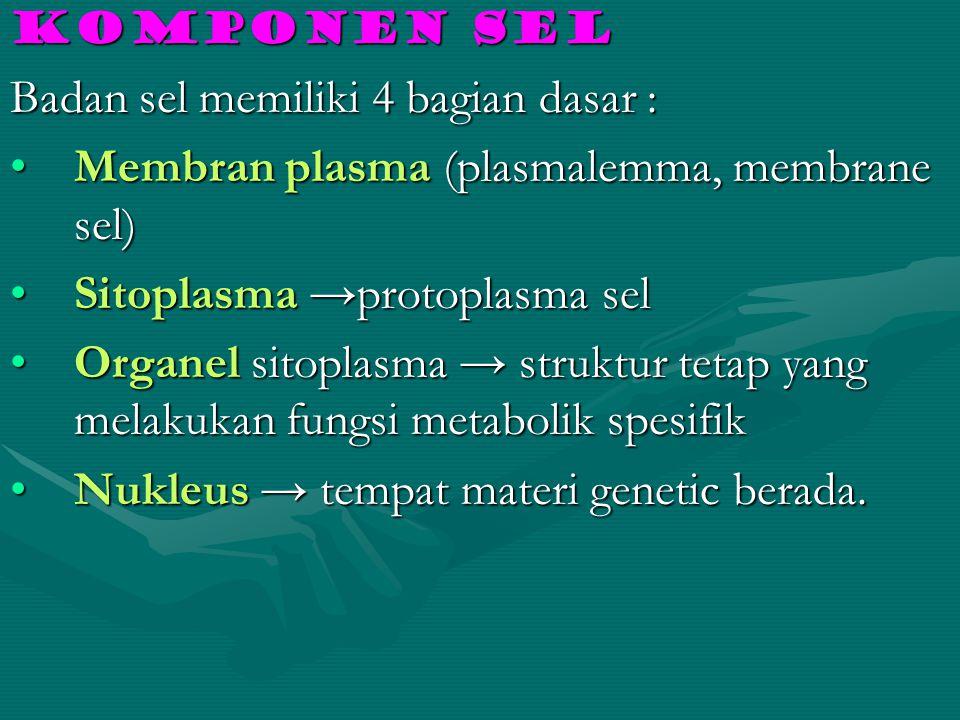 Komponen sel Badan sel memiliki 4 bagian dasar : Membran plasma (plasmalemma, membrane sel)Membran plasma (plasmalemma, membrane sel) Sitoplasma →prot