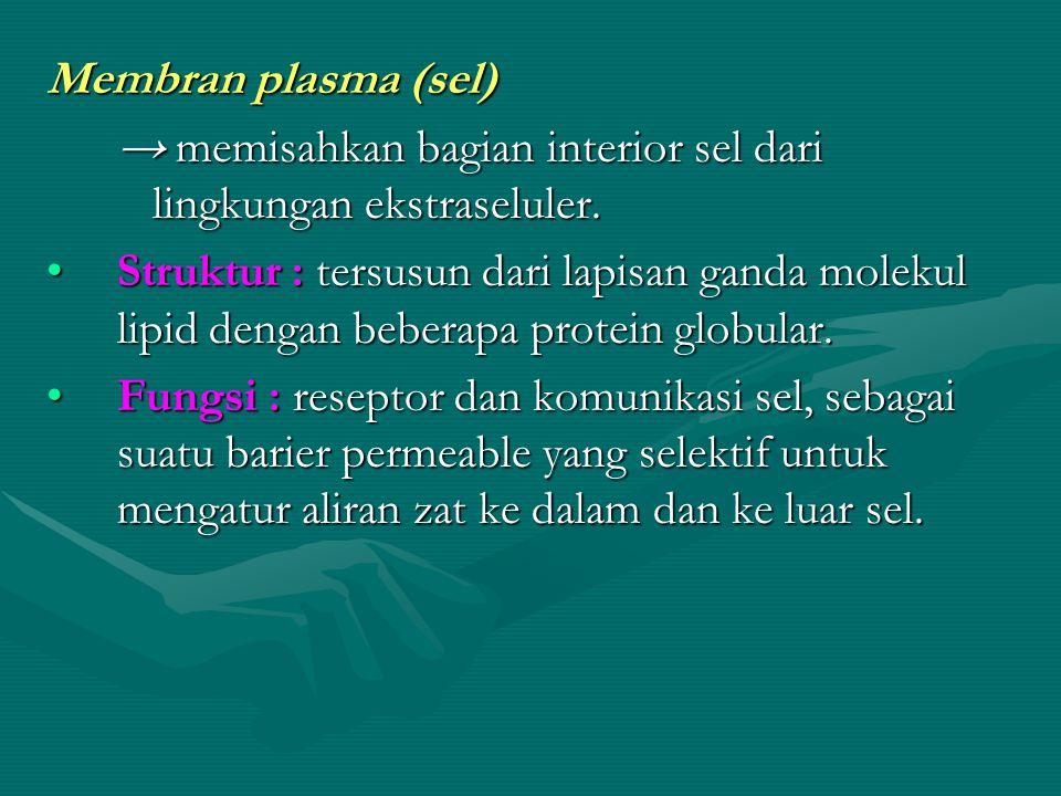 Membran plasma (sel) → memisahkan bagian interior sel dari lingkungan ekstraseluler. Struktur : tersusun dari lapisan ganda molekul lipid dengan beber