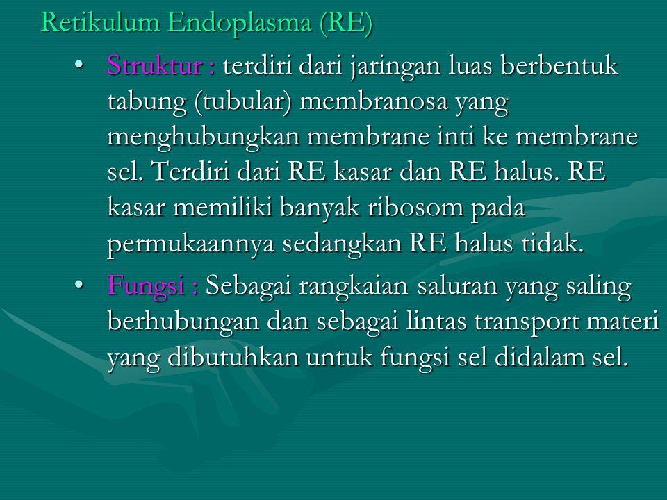 Retikulum Endoplasma (RE) Struktur : terdiri dari jaringan luas berbentuk tabung (tubular) membranosa yang menghubungkan membrane inti ke membrane sel