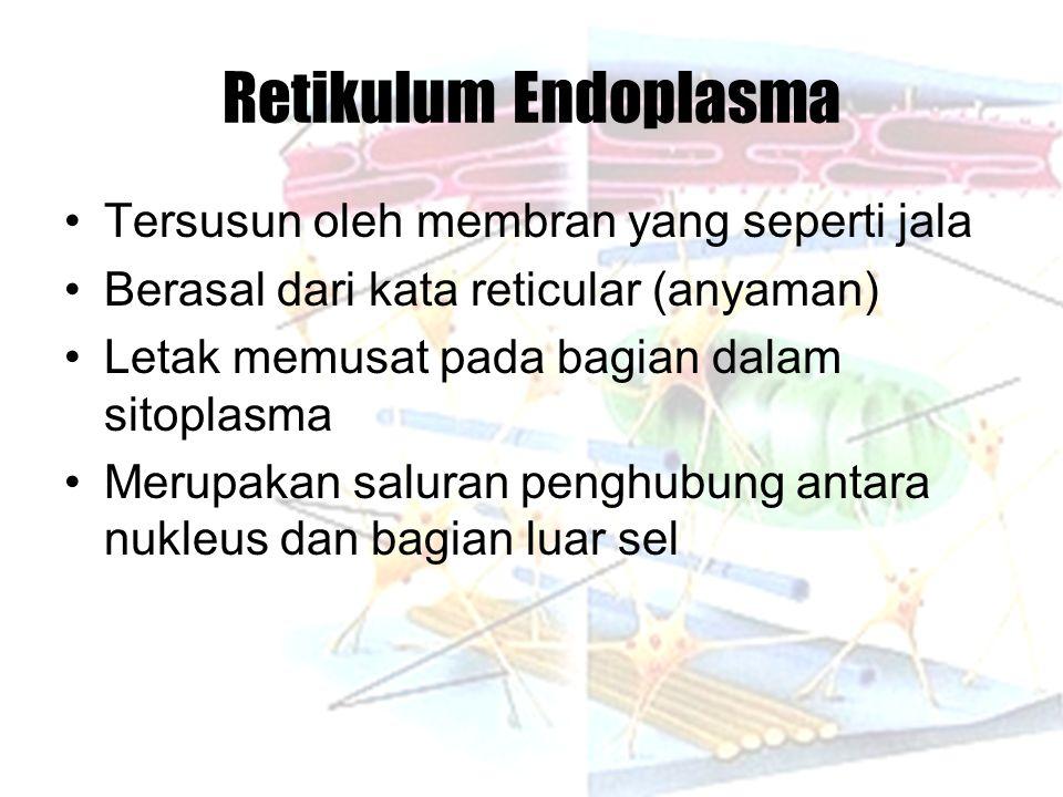 Retikulum Endoplasma Tersusun oleh membran yang seperti jala Berasal dari kata reticular (anyaman) Letak memusat pada bagian dalam sitoplasma Merupakan saluran penghubung antara nukleus dan bagian luar sel