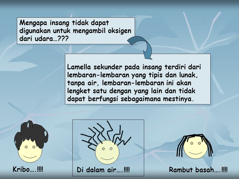 17 Mengapa insang tidak dapat digunakan untuk mengambil oksigen dari udara…??? Lamella sekunder pada insang terdiri dari lembaran-lembaran yang tipis
