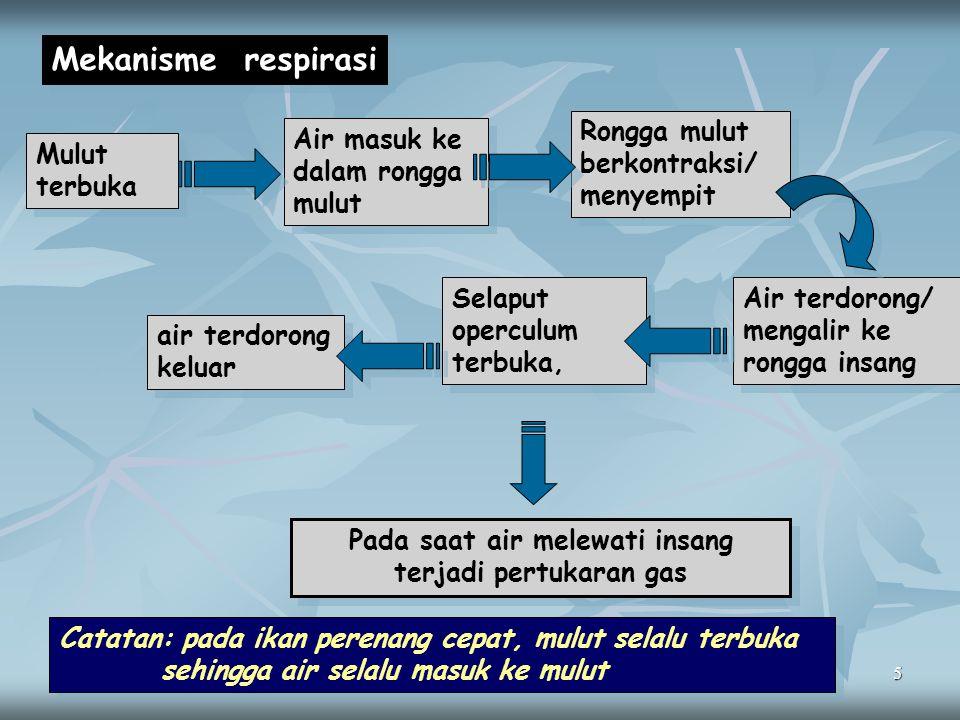 5 Mekanisme respirasi Mulut terbuka Rongga mulut berkontraksi/ menyempit Selaput operculum terbuka, Air terdorong/ mengalir ke rongga insang Pada saat