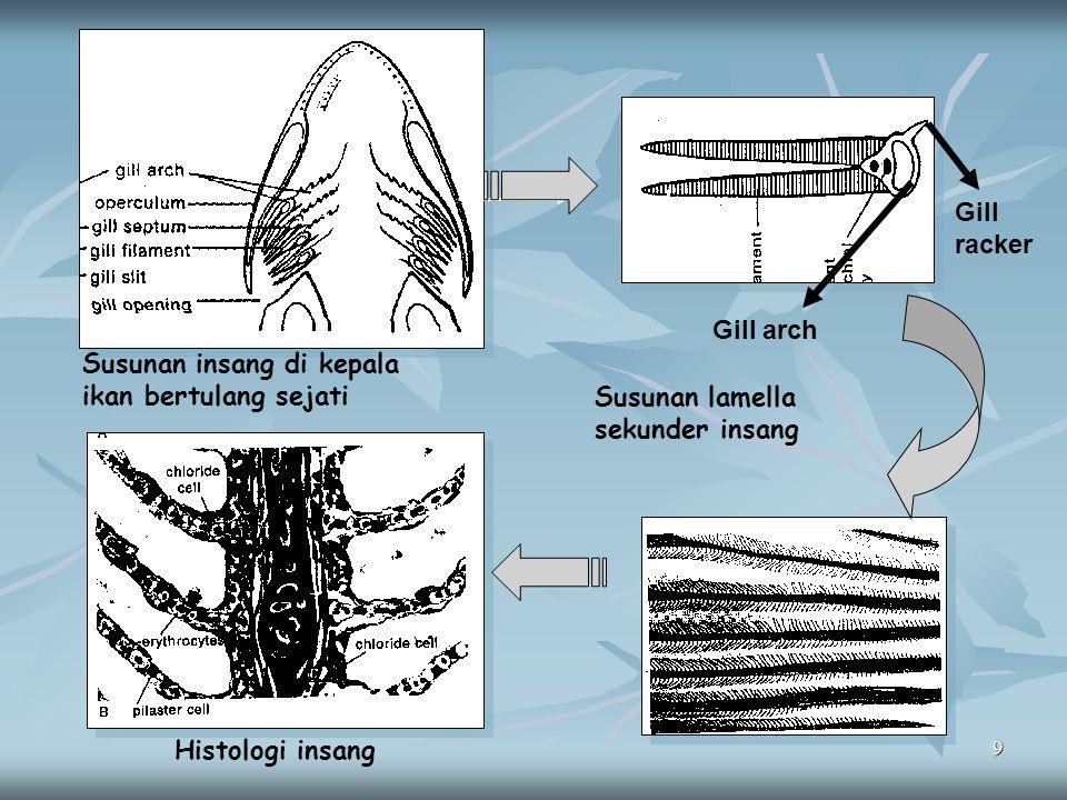 9 Susunan insang di kepala ikan bertulang sejati Gill arch Gill racker Susunan lamella sekunder insang Histologi insang
