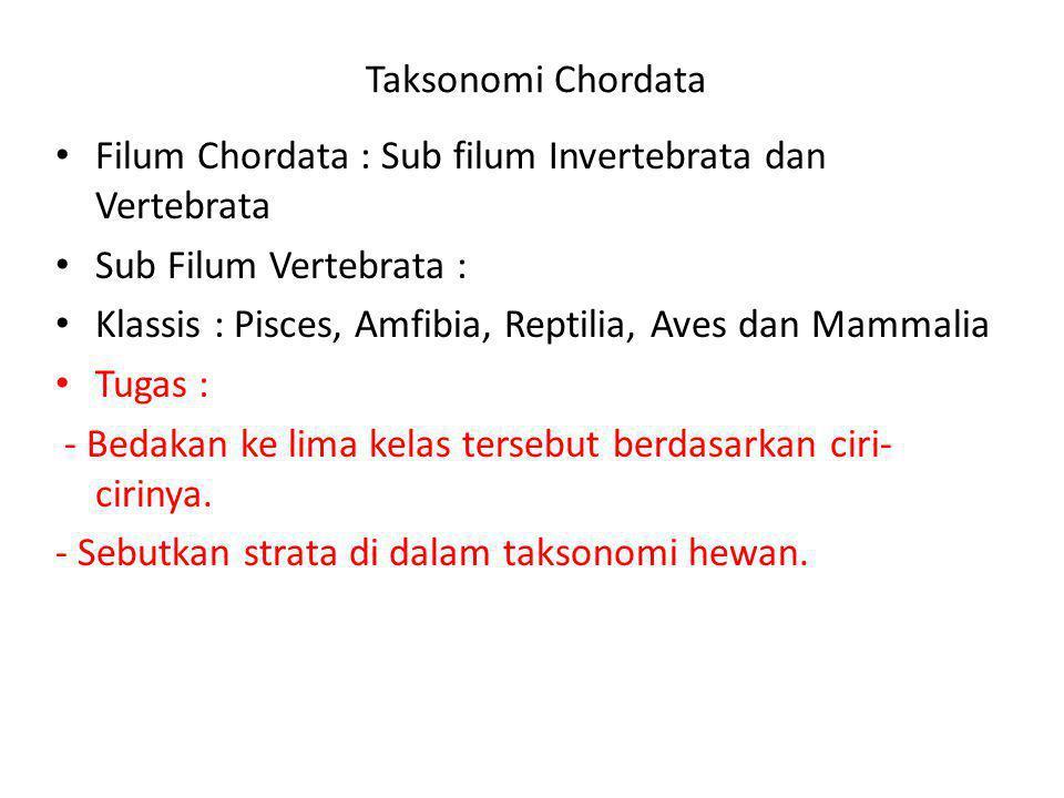Taksonomi Chordata Filum Chordata : Sub filum Invertebrata dan Vertebrata Sub Filum Vertebrata : Klassis : Pisces, Amfibia, Reptilia, Aves dan Mammali
