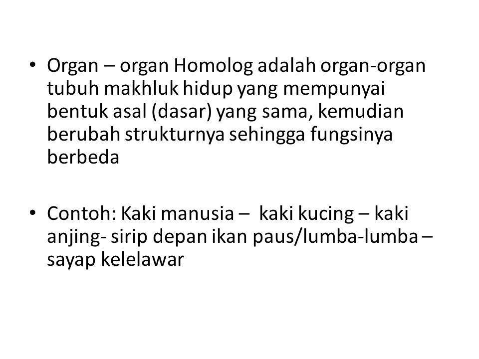 Organ – organ Homolog adalah organ-organ tubuh makhluk hidup yang mempunyai bentuk asal (dasar) yang sama, kemudian berubah strukturnya sehingga fungs