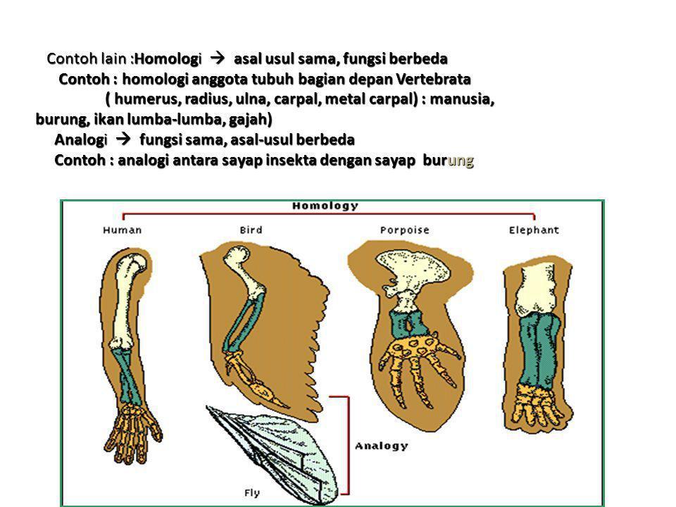 Contoh lain :Homologi  asal usul sama, fungsi berbeda Contoh lain :Homologi  asal usul sama, fungsi berbeda Contoh : homologi anggota tubuh bagian d