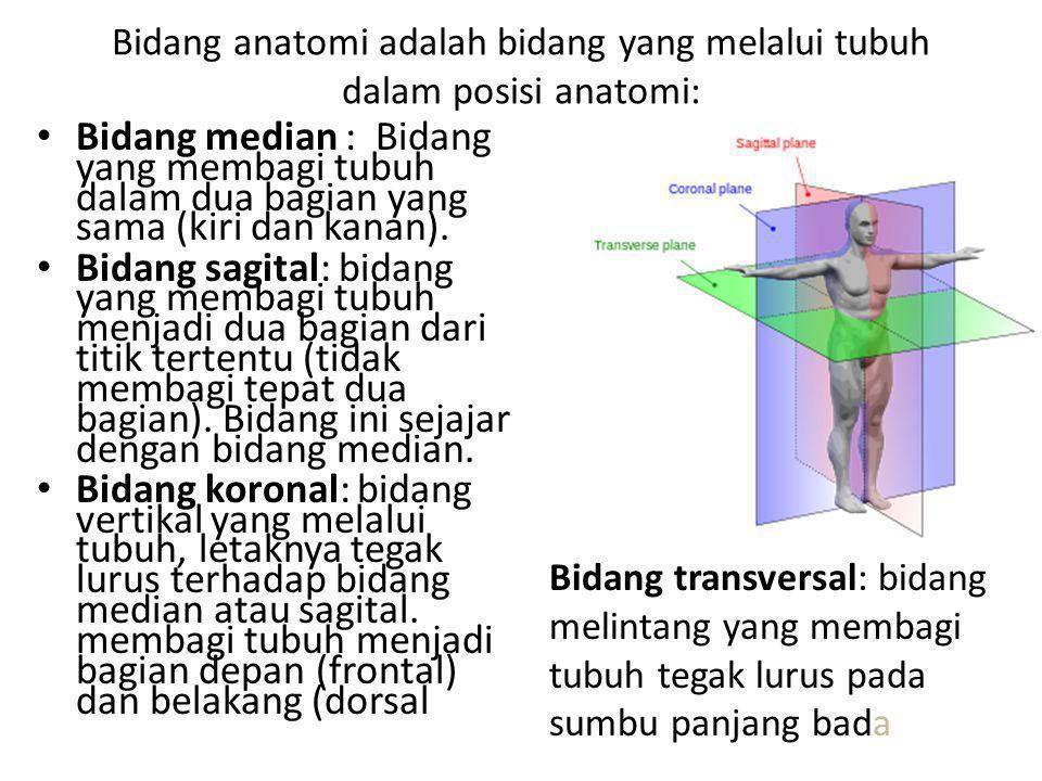 Bidang anatomi adalah bidang yang melalui tubuh dalam posisi anatomi: Bidang median : Bidang yang membagi tubuh dalam dua bagian yang sama (kiri dan k