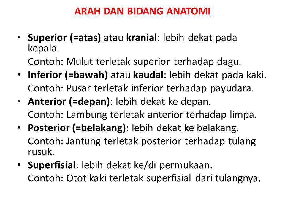ARAH DAN BIDANG ANATOMI Superior (=atas) atau kranial: lebih dekat pada kepala. Contoh: Mulut terletak superior terhadap dagu. Inferior (=bawah) atau