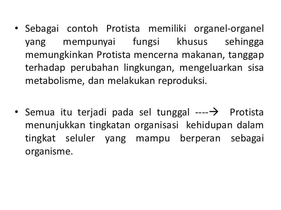 Sebagai contoh Protista memiliki organel-organel yang mempunyai fungsi khusus sehingga memungkinkan Protista mencerna makanan, tanggap terhadap peruba