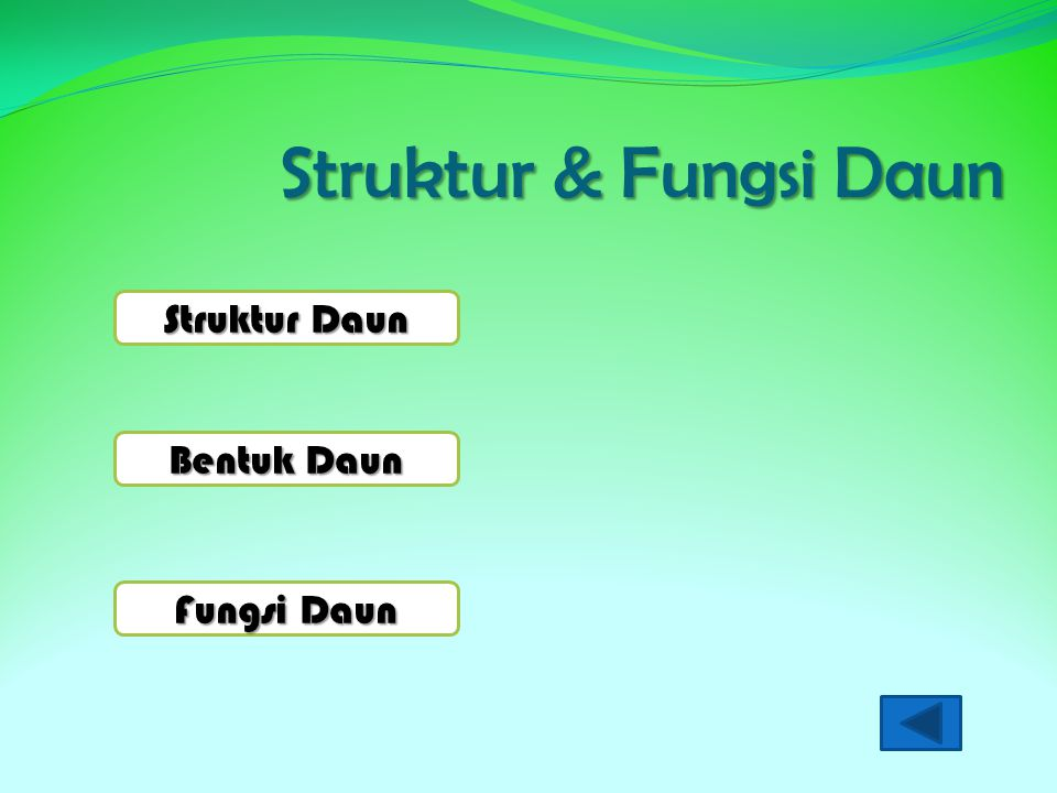 Struktur & Fungsi Daun Struktur Daun Struktur Daun Bentuk Daun Bentuk Daun Fungsi Daun Fungsi Daun