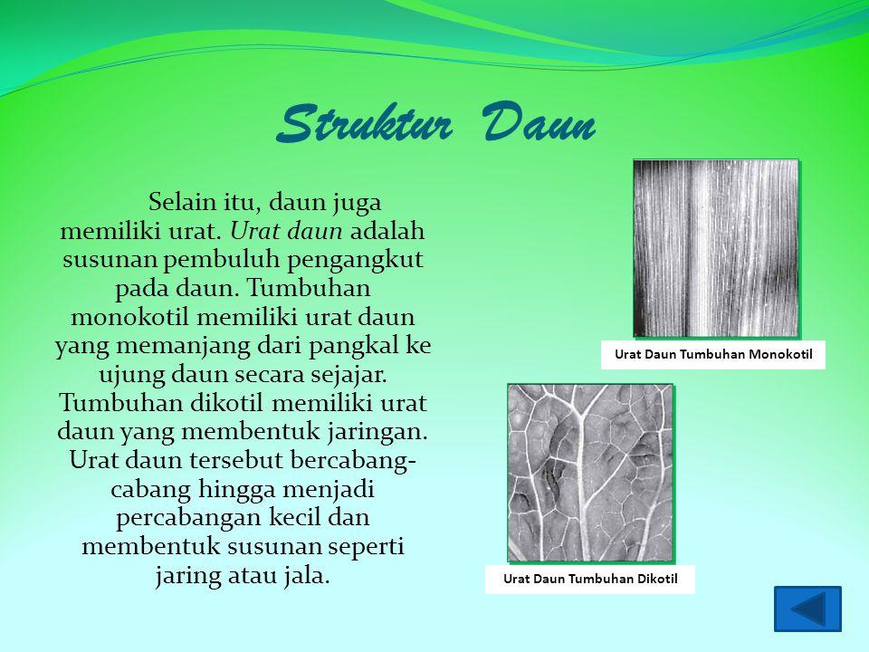 Struktur Daun Bagian daun lengkap terdiri atas tulang daun, helai daun, tangkai daun, dan pelepah daun. Contoh daun yang memiliki bagian-bagian lengka