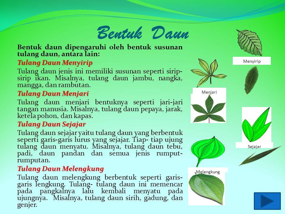 Bentuk Daun Bentuk daun dipengaruhi oleh bentuk susunan tulang daun, antara lain: Tulang Daun Menyirip Tulang daun jenis ini memiliki susunan seperti sirip- sirip ikan.