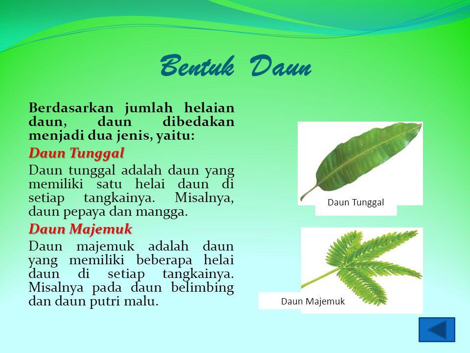 Bentuk Daun Berdasarkan jumlah helaian daun, daun dibedakan menjadi dua jenis, yaitu: Daun Tunggal Daun tunggal adalah daun yang memiliki satu helai daun di setiap tangkainya.