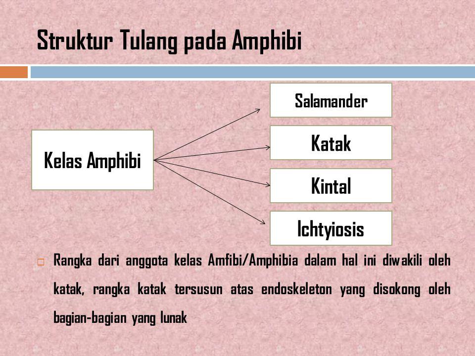 Struktur Tubuh Ikan Bertulang Keras