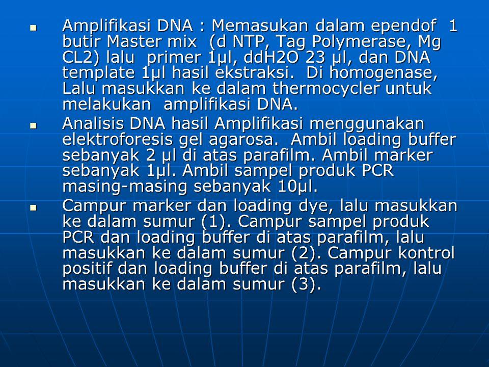 Amplifikasi DNA : Memasukan dalam ependof 1 butir Master mix (d NTP, Tag Polymerase, Mg CL2) lalu primer 1µl, ddH2O 23 µl, dan DNA template 1µl hasil ekstraksi.