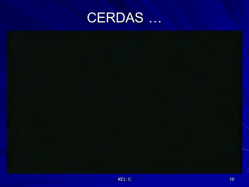 KEL: C 10 CERDAS …