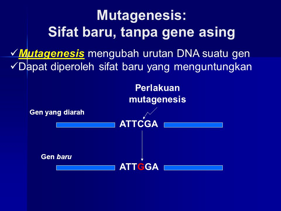ATTCGA ATTGGA Gen yang diarah Gen baru Perlakuan mutagenesis Mutagenesis: Sifat baru, tanpa gene asing Mutagenesis mengubah urutan DNA suatu gen Dapat