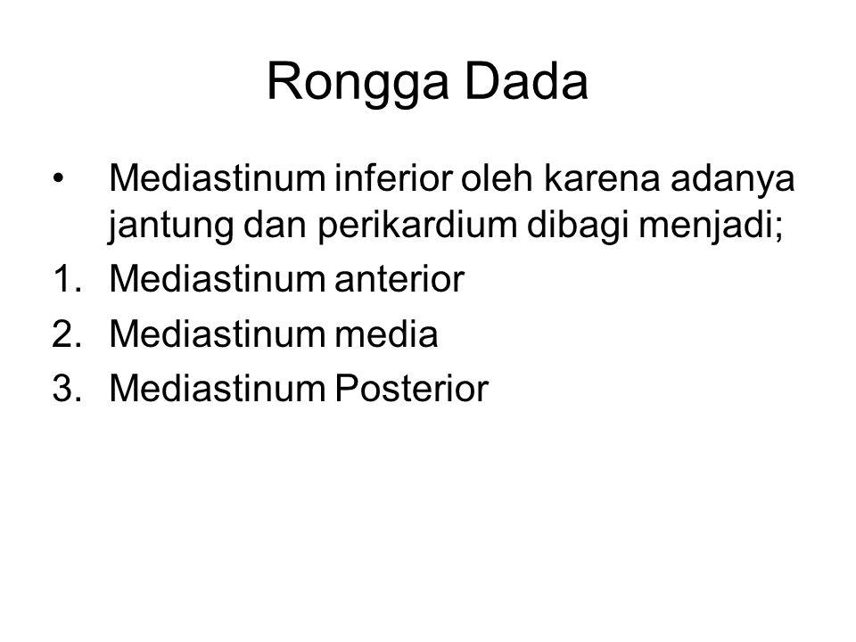 Rongga Dada Mediastinum inferior oleh karena adanya jantung dan perikardium dibagi menjadi; 1.Mediastinum anterior 2.Mediastinum media 3.Mediastinum P
