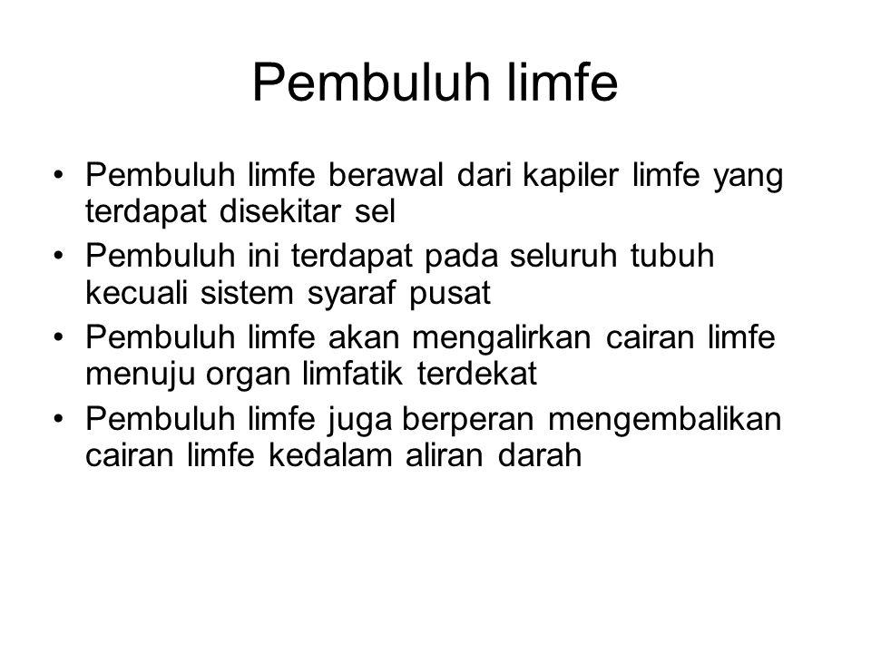 Pembuluh limfe Pembuluh limfe berawal dari kapiler limfe yang terdapat disekitar sel Pembuluh ini terdapat pada seluruh tubuh kecuali sistem syaraf pusat Pembuluh limfe akan mengalirkan cairan limfe menuju organ limfatik terdekat Pembuluh limfe juga berperan mengembalikan cairan limfe kedalam aliran darah