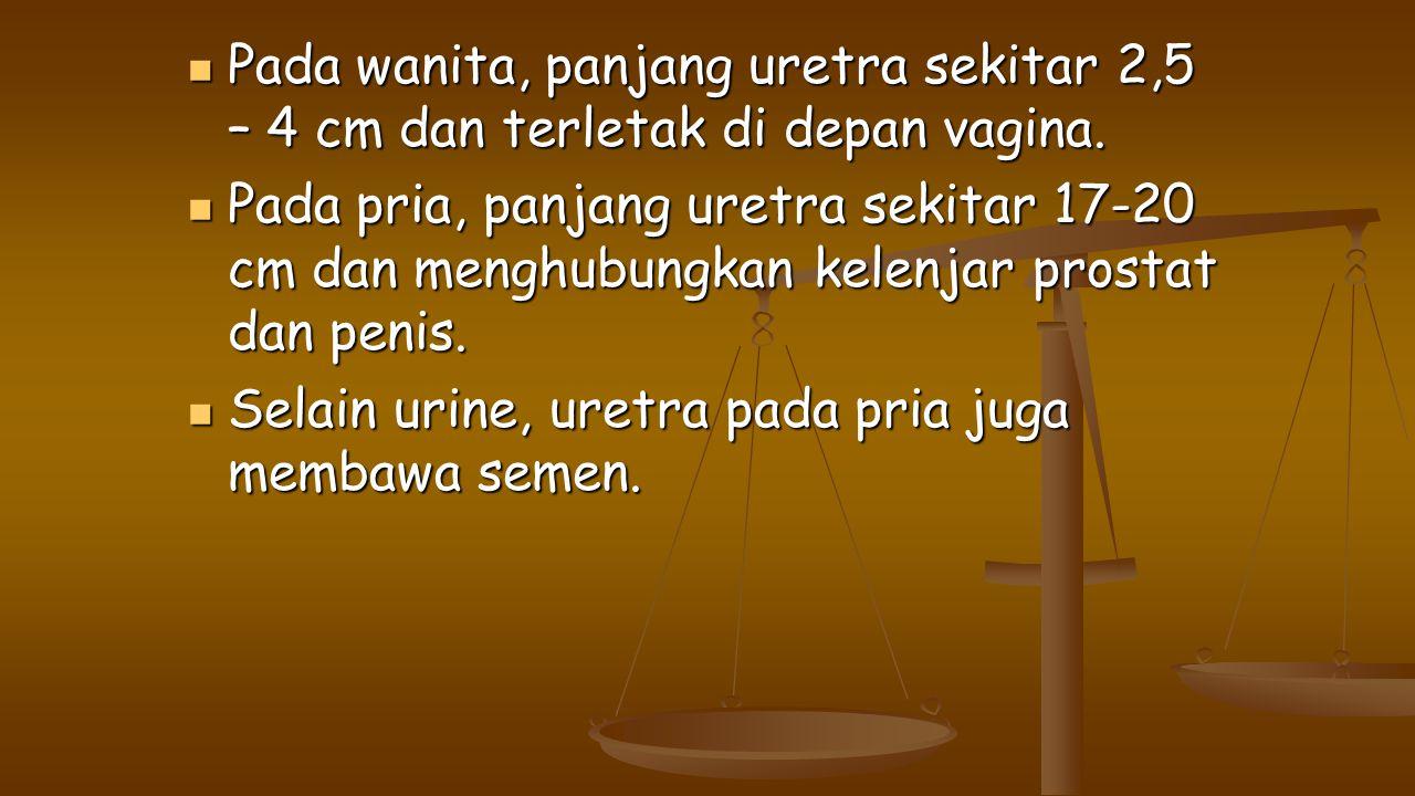 Pada wanita, panjang uretra sekitar 2,5 – 4 cm dan terletak di depan vagina.