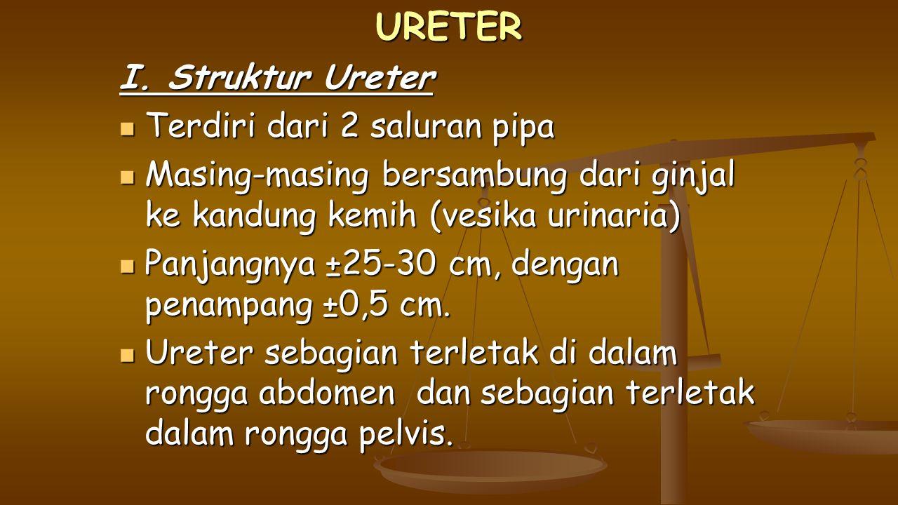 URETER I. Struktur Ureter Terdiri dari 2 saluran pipa Terdiri dari 2 saluran pipa Masing-masing bersambung dari ginjal ke kandung kemih (vesika urinar