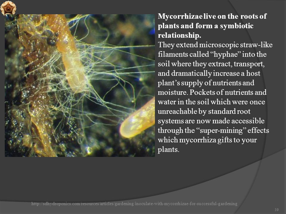 http://sdhydroponics.com/resources/articles/gardening/inoculate-with-mycorrhizae-for-successful-gardening 39 Mycorrhizae live on the roots of plants a