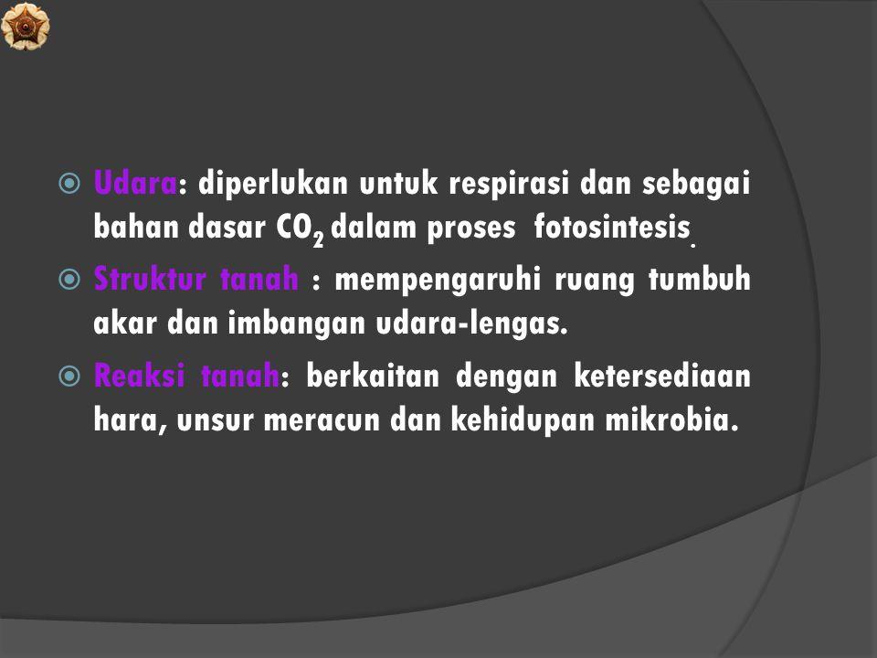  Udara: diperlukan untuk respirasi dan sebagai bahan dasar CO 2 dalam proses fotosintesis.  Struktur tanah : mempengaruhi ruang tumbuh akar dan imba