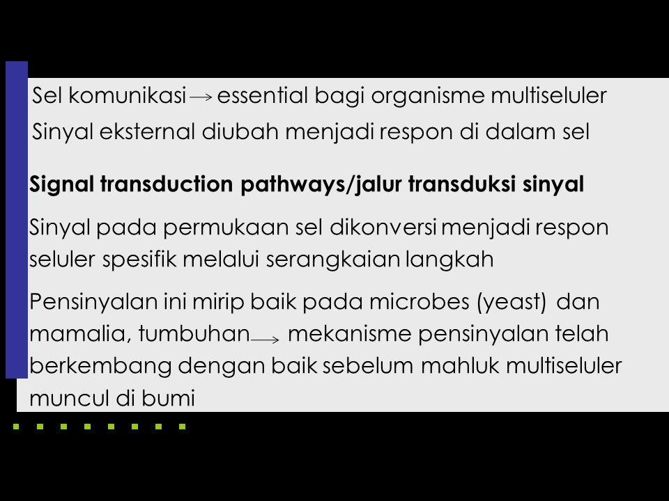 Sel komunikasi essential bagi organisme multiseluler Sinyal eksternal diubah menjadi respon di dalam sel Signal transduction pathways/jalur transduksi
