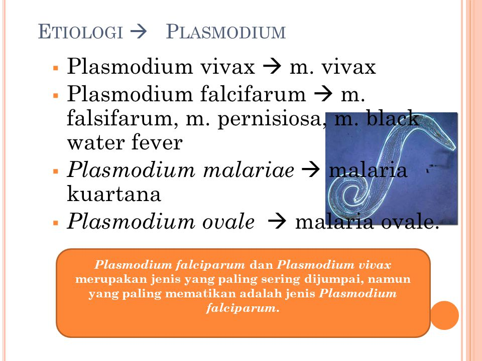 E TIOLOGI  P LASMODIUM  Plasmodium vivax  m. vivax  Plasmodium falcifarum  m. falsifarum, m. pernisiosa, m. black water fever  Plasmodium malari