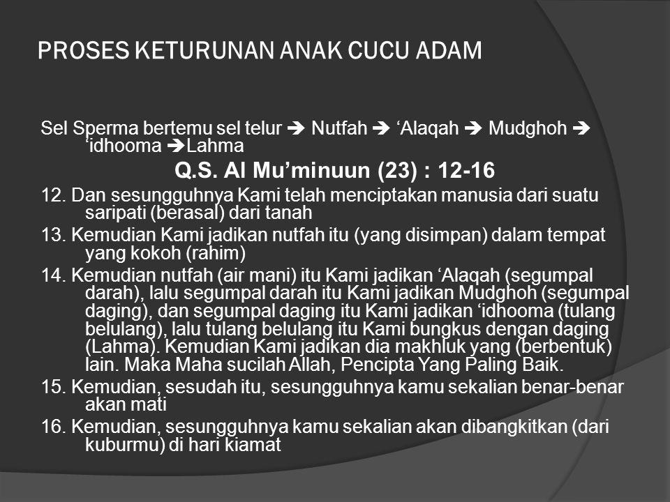PROSES KETURUNAN ANAK CUCU ADAM Sel Sperma bertemu sel telur  Nutfah  'Alaqah  Mudghoh  'idhooma  Lahma Q.S. Al Mu'minuun (23) : 12-16 12. Dan se
