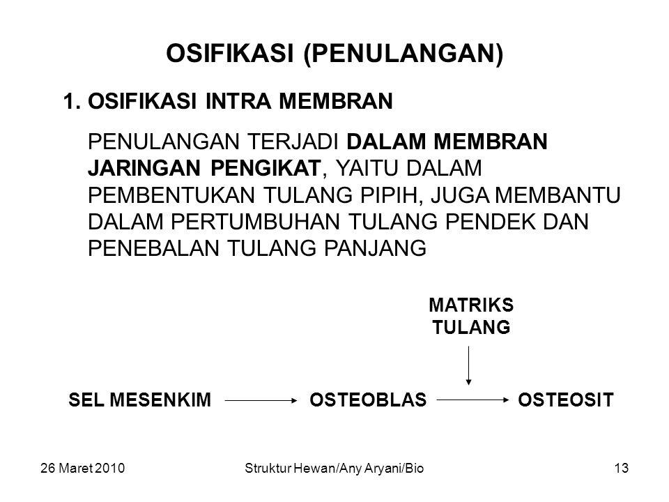 26 Maret 2010Struktur Hewan/Any Aryani/Bio13 OSIFIKASI (PENULANGAN) 1.OSIFIKASI INTRA MEMBRAN PENULANGAN TERJADI DALAM MEMBRAN JARINGAN PENGIKAT, YAIT