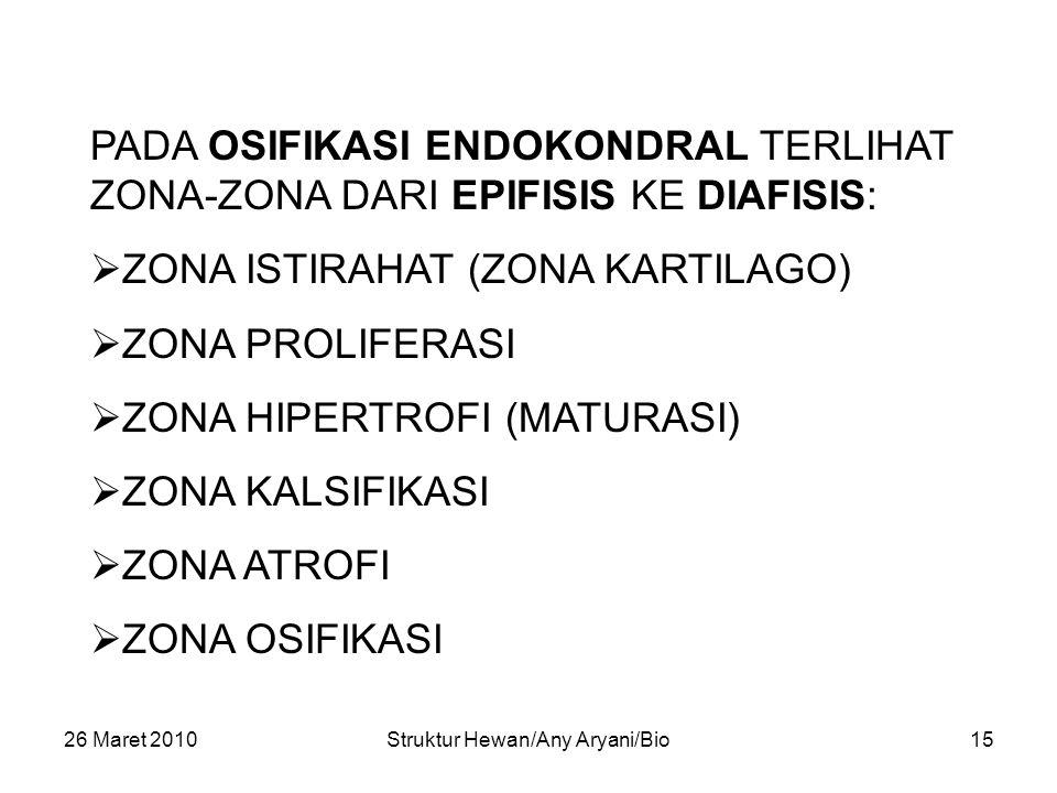 26 Maret 2010Struktur Hewan/Any Aryani/Bio15 PADA OSIFIKASI ENDOKONDRAL TERLIHAT ZONA-ZONA DARI EPIFISIS KE DIAFISIS:  ZONA ISTIRAHAT (ZONA KARTILAGO