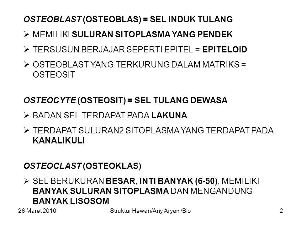 26 Maret 2010Struktur Hewan/Any Aryani/Bio3  BERDASARKAN ADA/TIDAKNYA RONGGA : TULANG KOMPAK (TULANG PADAT) DAN TULANG BUNGA KARANG (TULANG SPONSA)  TULANG KOMPAK CIRI KHAS: TERSUSUN ATAS SISTEM-2 HAVERS (OSTEON) YANG MASING-2 TERDIRI 4-20 LAMELA HAVERS, YANG TERSUSUN SECARA KONSENTRIS MENGELILINGI SALURAN HAVERS.