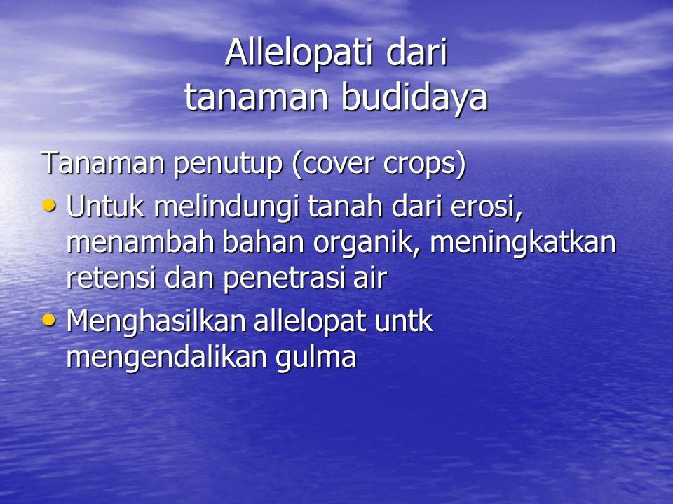 Allelopati dari tanaman budidaya Tanaman penutup (cover crops) Untuk melindungi tanah dari erosi, menambah bahan organik, meningkatkan retensi dan penetrasi air Untuk melindungi tanah dari erosi, menambah bahan organik, meningkatkan retensi dan penetrasi air Menghasilkan allelopat untk mengendalikan gulma Menghasilkan allelopat untk mengendalikan gulma