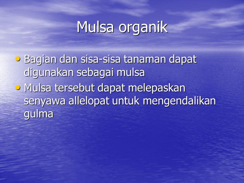 Mulsa organik Bagian dan sisa-sisa tanaman dapat digunakan sebagai mulsa Bagian dan sisa-sisa tanaman dapat digunakan sebagai mulsa Mulsa tersebut dapat melepaskan senyawa allelopat untuk mengendalikan gulma Mulsa tersebut dapat melepaskan senyawa allelopat untuk mengendalikan gulma