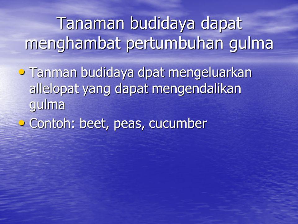 Tanaman budidaya dapat menghambat pertumbuhan gulma Tanman budidaya dpat mengeluarkan allelopat yang dapat mengendalikan gulma Tanman budidaya dpat mengeluarkan allelopat yang dapat mengendalikan gulma Contoh: beet, peas, cucumber Contoh: beet, peas, cucumber