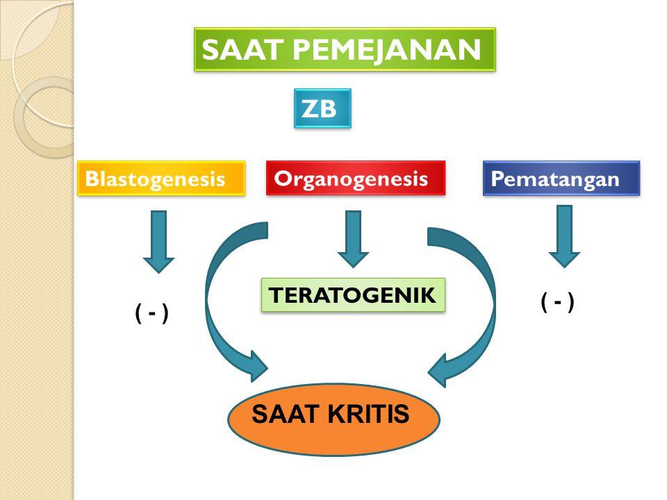 SAAT PEMEJANAN ZB Blastogenesis Organogenesis Pematangan ( - ) TERATOGENIK SAAT KRITIS ( - )