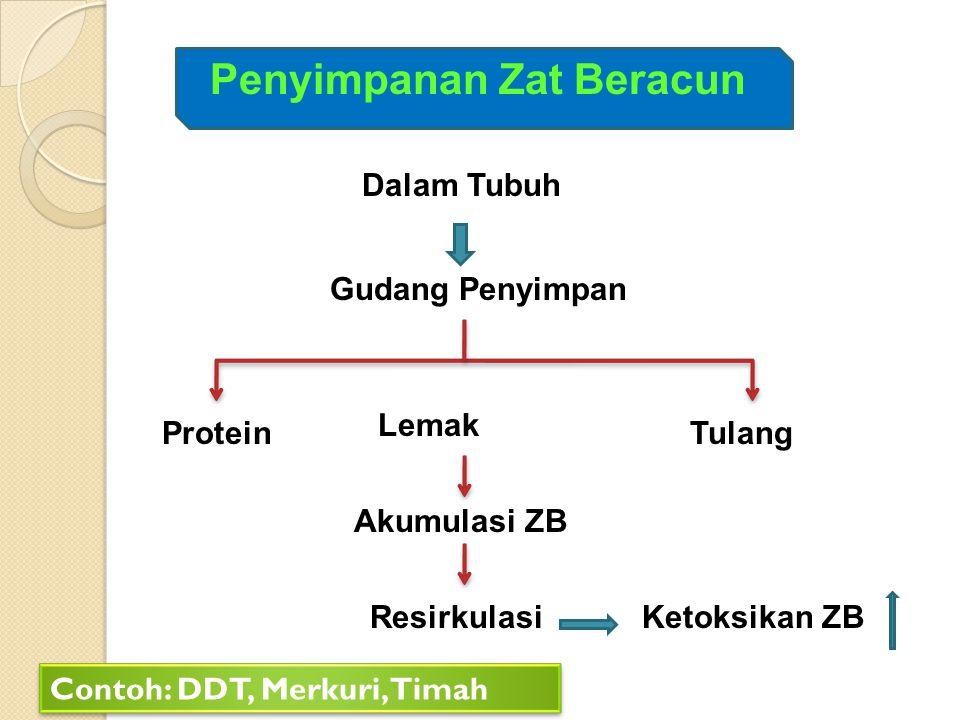Penyimpanan Zat Beracun Dalam Tubuh Gudang Penyimpan Protein Lemak Tulang Akumulasi ZB ResirkulasiKetoksikan ZB Contoh: DDT, Merkuri, Timah