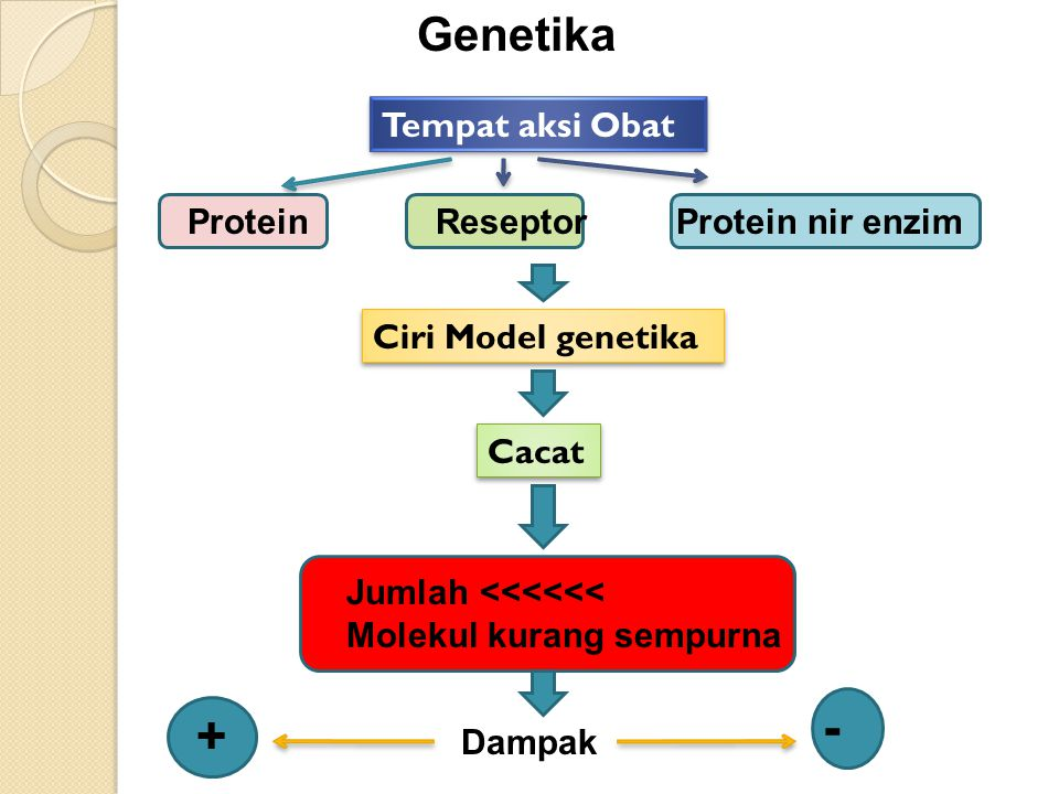 Genetika Protein Reseptor Protein nir enzim Tempat aksi Obat Ciri Model genetika Cacat Jumlah <<<<<< Molekul kurang sempurna Dampak + -