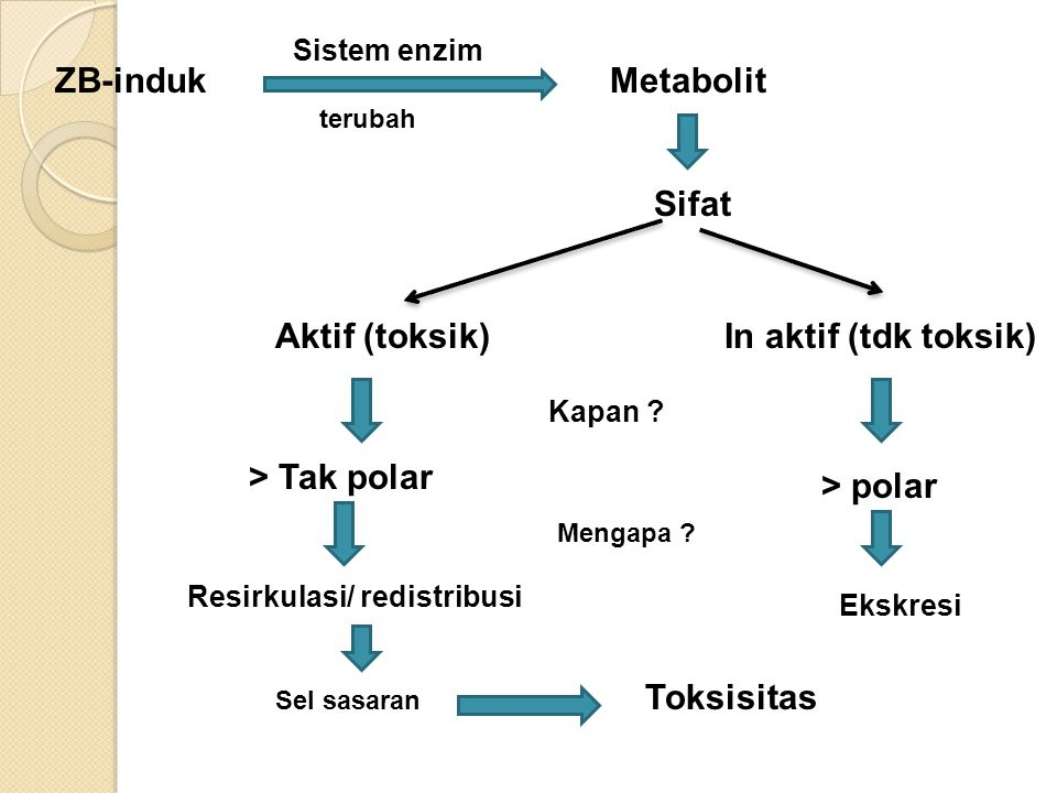 ZB-induk Sistem enzim terubah Metabolit Sifat Aktif (toksik)In aktif (tdk toksik) > Tak polar > polar Resirkulasi/ redistribusi Sel sasaran Toksisitas