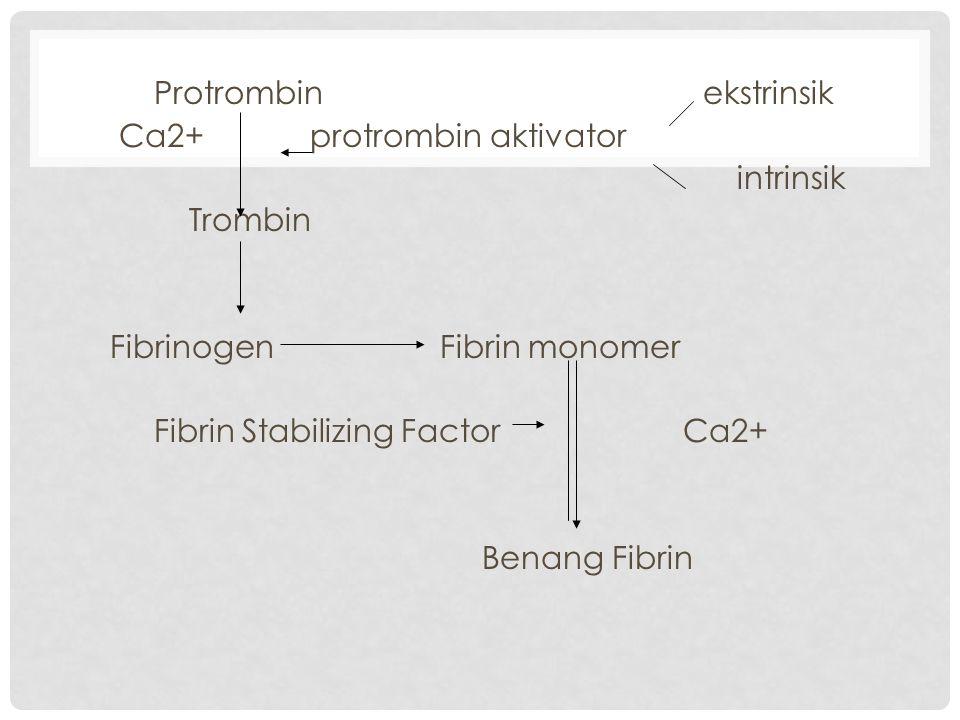 Protrombin ekstrinsik Ca2+ protrombin aktivator intrinsik Trombin Fibrinogen Fibrin monomer Fibrin Stabilizing Factor Ca2+ Benang Fibrin