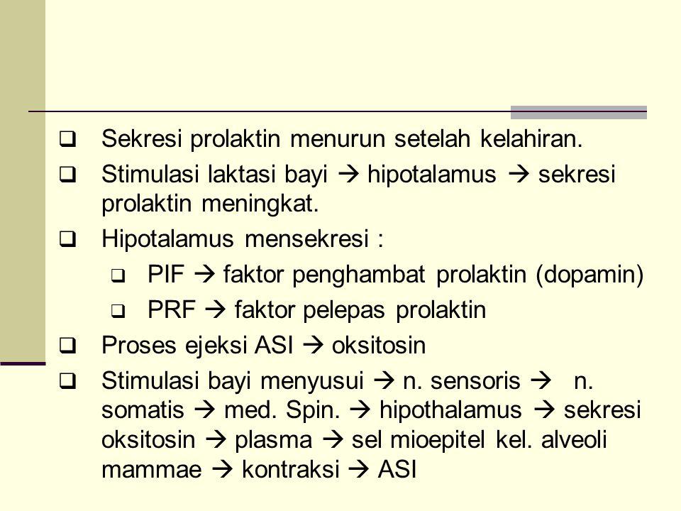 Sekresi prolaktin menurun setelah kelahiran.  Stimulasi laktasi bayi  hipotalamus  sekresi prolaktin meningkat.  Hipotalamus mensekresi :  PIF
