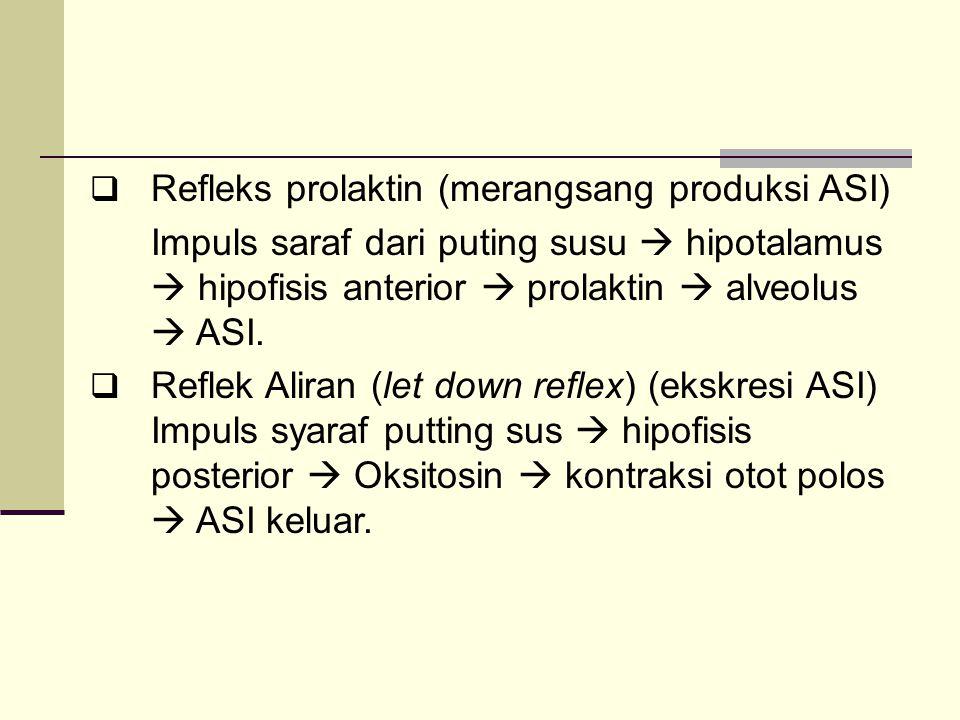  Refleks prolaktin (merangsang produksi ASI) Impuls saraf dari puting susu  hipotalamus  hipofisis anterior  prolaktin  alveolus  ASI.  Reflek