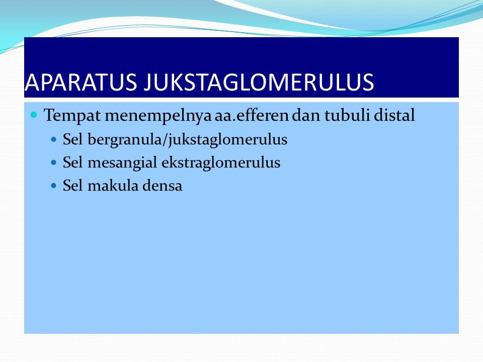 APARATUS JUKSTAGLOMERULUS Tempat menempelnya aa.efferen dan tubuli distal Sel bergranula/jukstaglomerulus Sel mesangial ekstraglomerulus Sel makula de