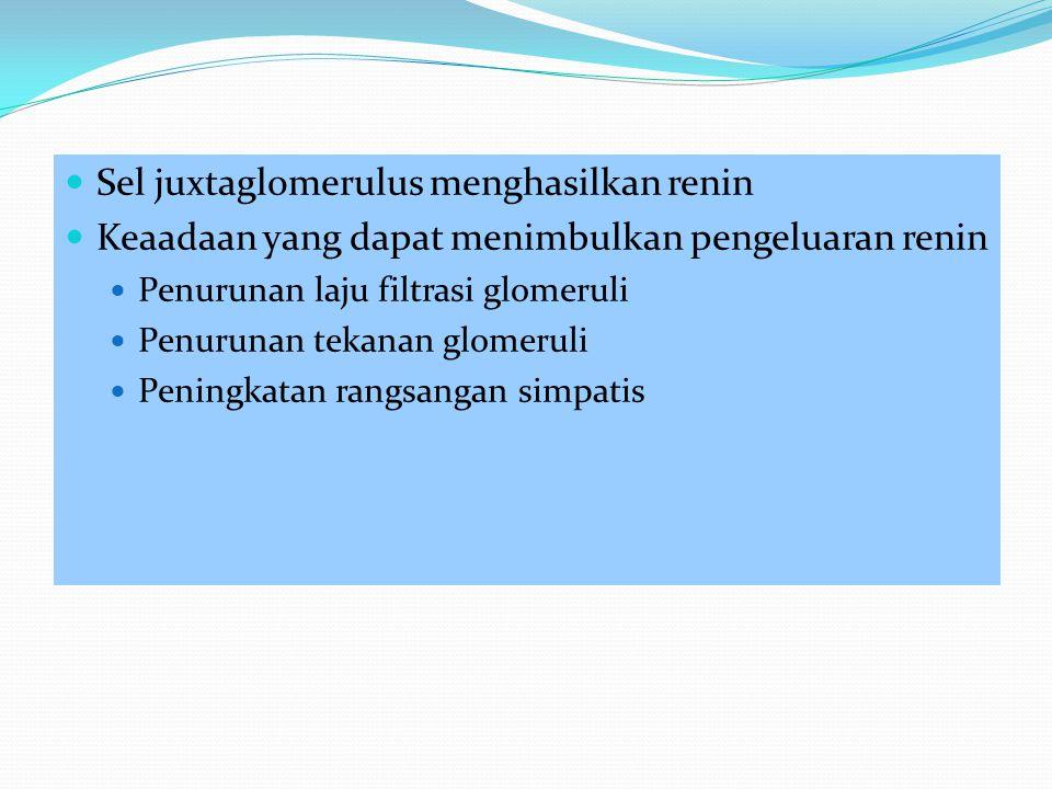 Sel juxtaglomerulus menghasilkan renin Keaadaan yang dapat menimbulkan pengeluaran renin Penurunan laju filtrasi glomeruli Penurunan tekanan glomeruli