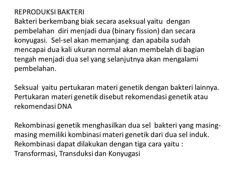 REPRODUKSI BAKTERI Bakteri berkembang biak secara aseksual yaitu dengan pembelahan diri menjadi dua (binary fission) dan secara konyugasi. Sel-sel aka