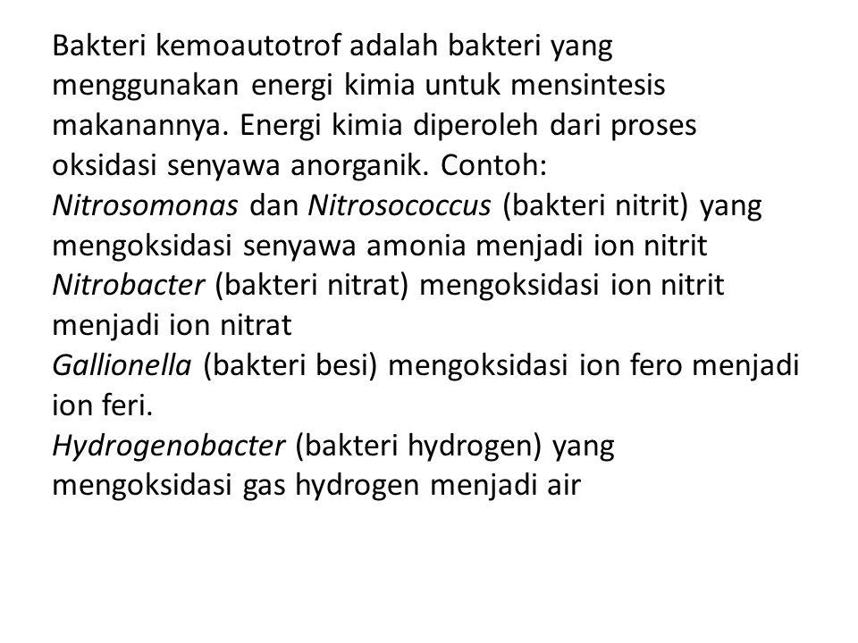 Bakteri kemoautotrof adalah bakteri yang menggunakan energi kimia untuk mensintesis makanannya. Energi kimia diperoleh dari proses oksidasi senyawa an
