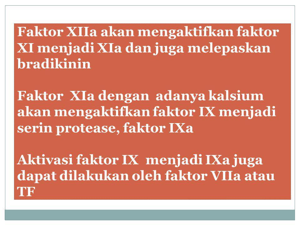 Faktor XIIa akan mengaktifkan faktor XI menjadi XIa dan juga melepaskan bradikinin Faktor XIa dengan adanya kalsium akan mengaktifkan faktor IX menjad