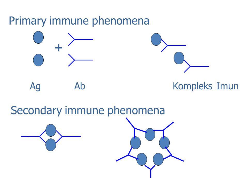Primary immune phenomena Secondary immune phenomena + Ag Ab Kompleks Imun